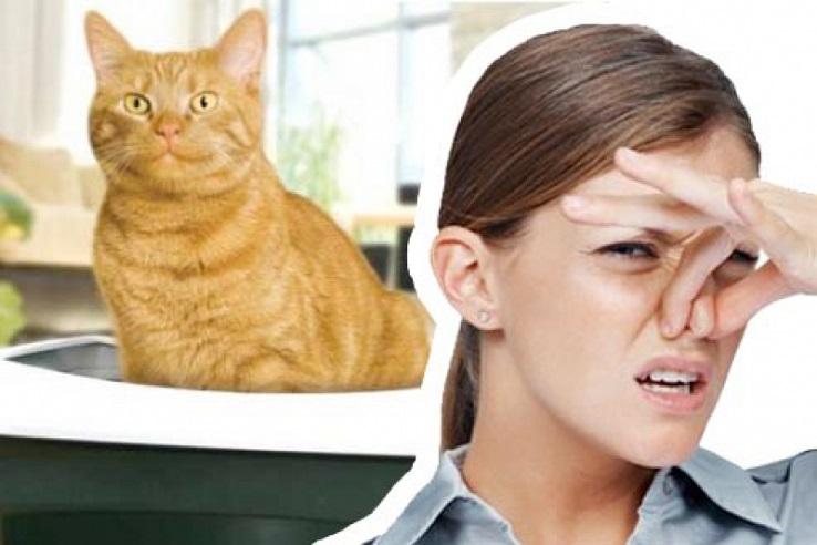 Запах мочи домашних животных в Арзамасе